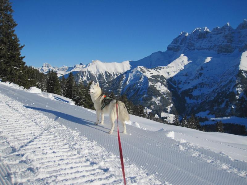 Nouvelles courses de Saskia dans la neige - Page 2 2212