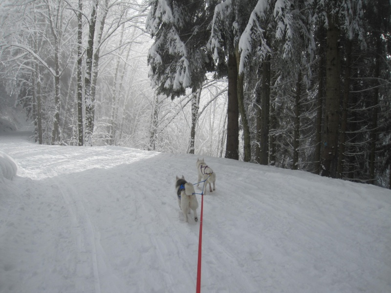 Ski-joering avec deux huskies 2213