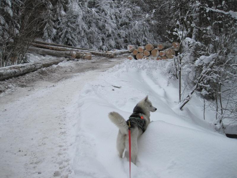 Nouvelles courses de Saskia dans la neige 2312