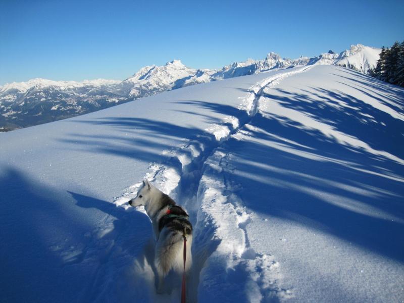 Nouvelles courses de Saskia dans la neige - Page 2 2313