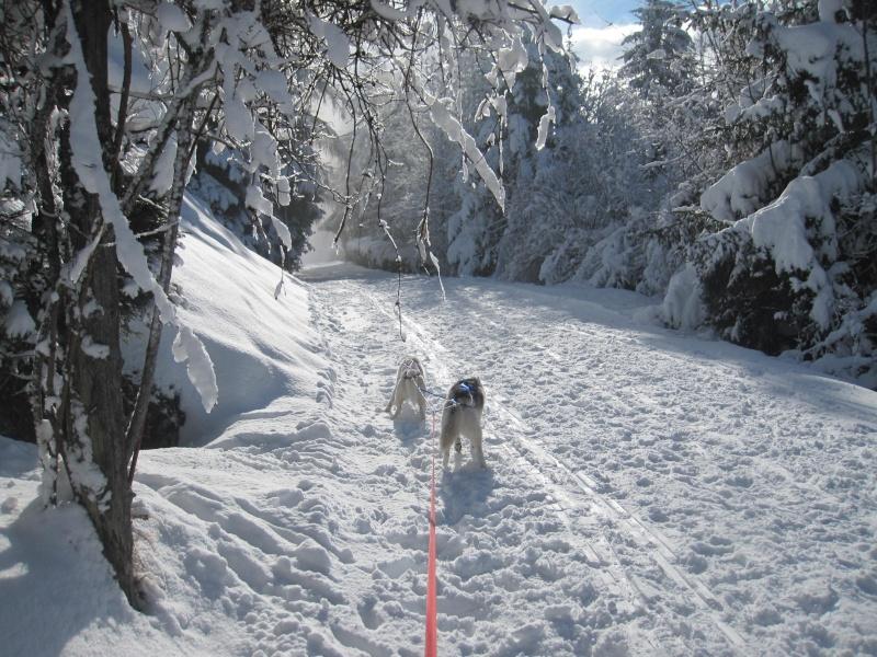 Ski-joering avec deux huskies 2314
