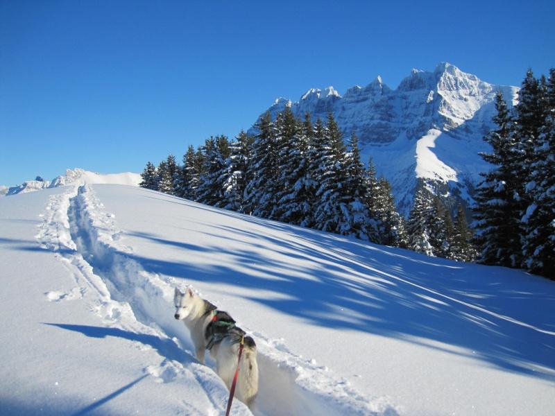 Nouvelles courses de Saskia dans la neige - Page 2 2412