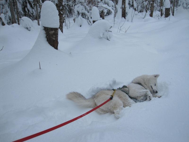 Nouvelles courses de Saskia dans la neige 2511