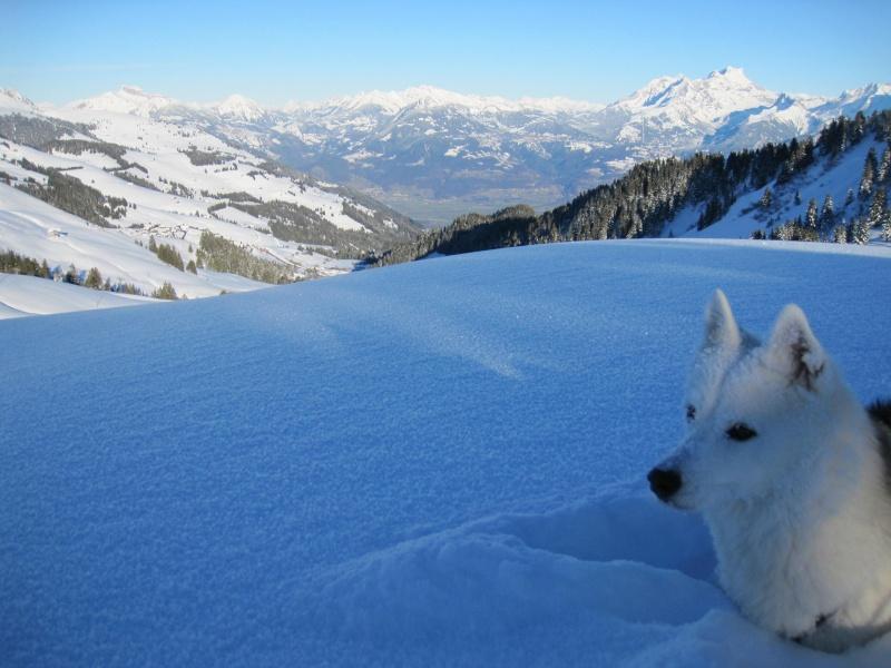 Nouvelles courses de Saskia dans la neige - Page 2 2611