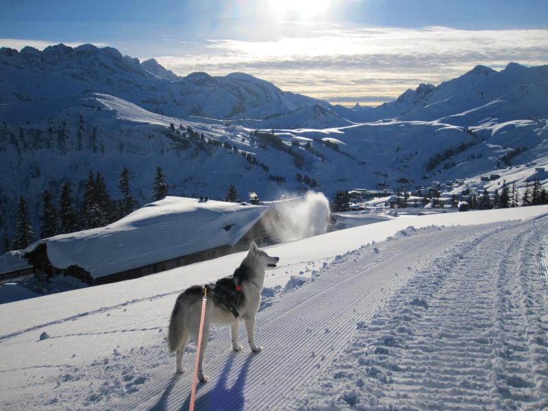 Nouvelles courses de Saskia dans la neige - Page 2 2711