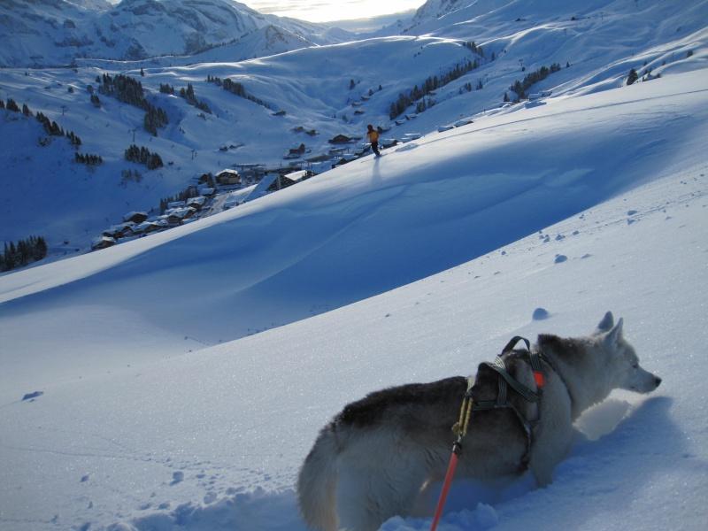 Nouvelles courses de Saskia dans la neige - Page 2 2911