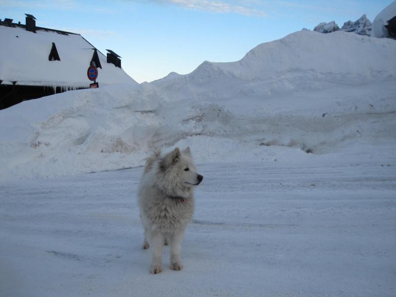 Nouvelles courses de Saskia dans la neige - Page 2 3011