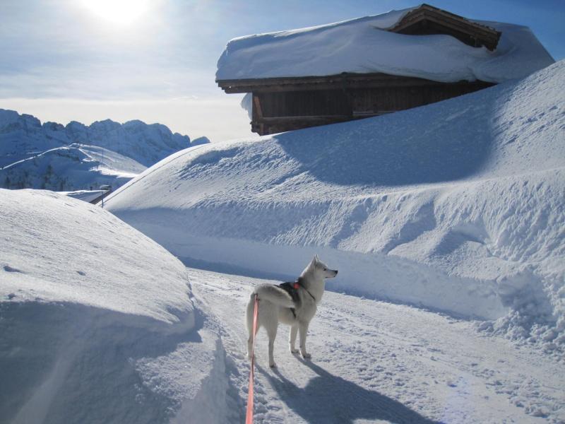 Nouvelles courses de Saskia dans la neige - Page 2 311