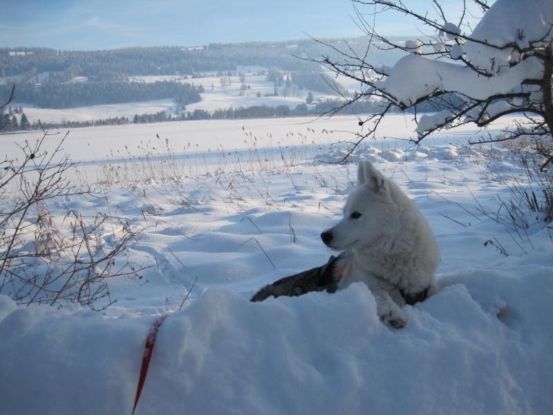Nouvelles courses de Saskia dans la neige 3110