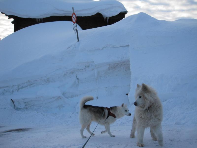 Nouvelles courses de Saskia dans la neige - Page 2 3111