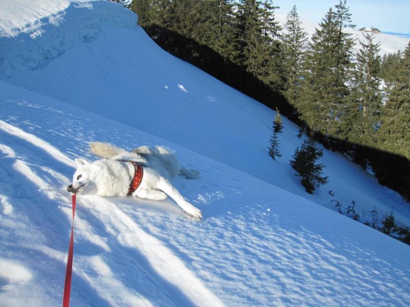 Nouvelles courses de Saskia dans la neige - Page 2 313