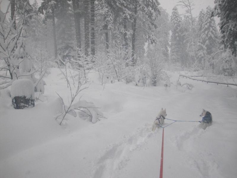 Ski-joering avec deux huskies 316