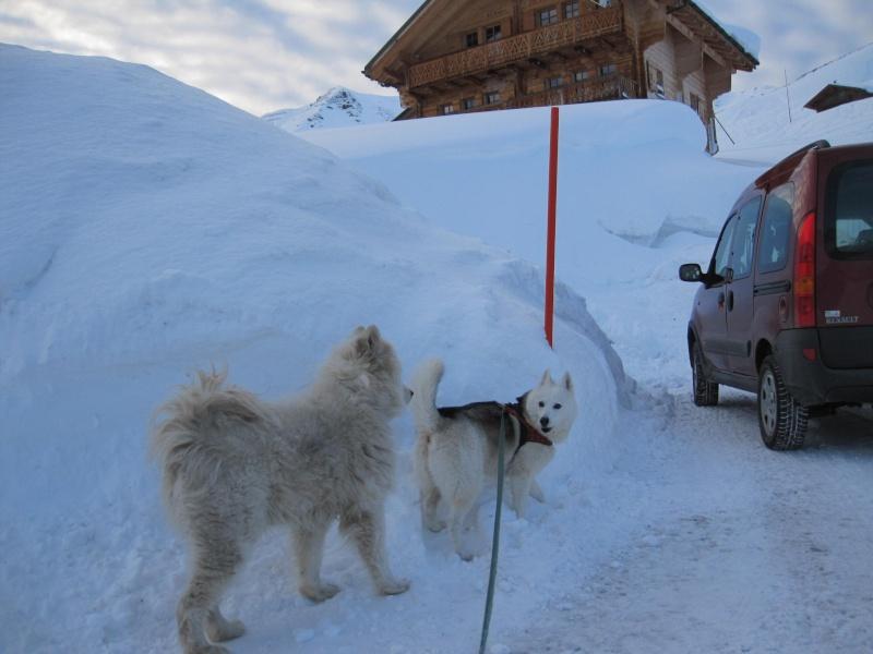 Nouvelles courses de Saskia dans la neige - Page 2 3211