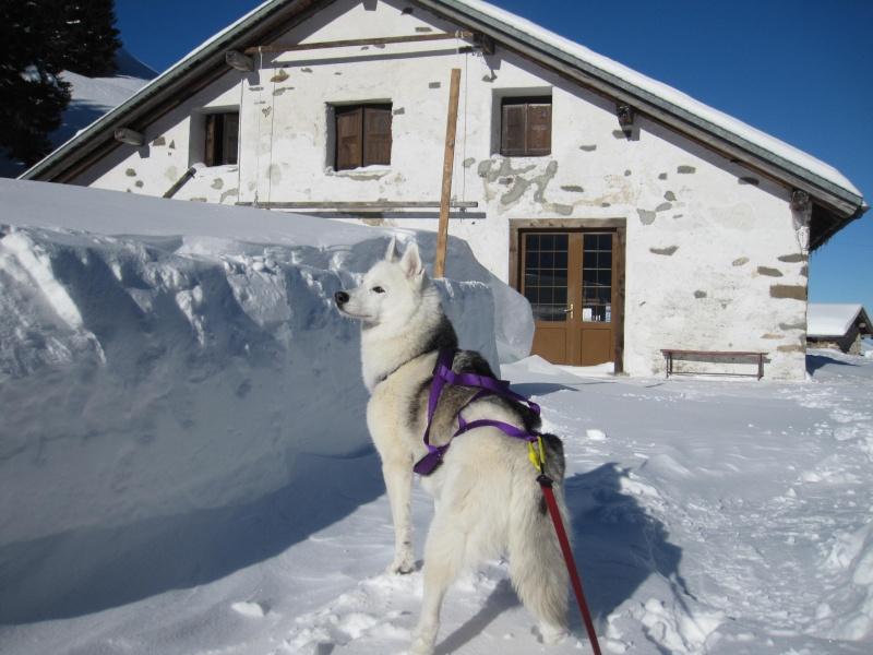 Nouvelles courses de Saskia dans la neige - Page 2 322