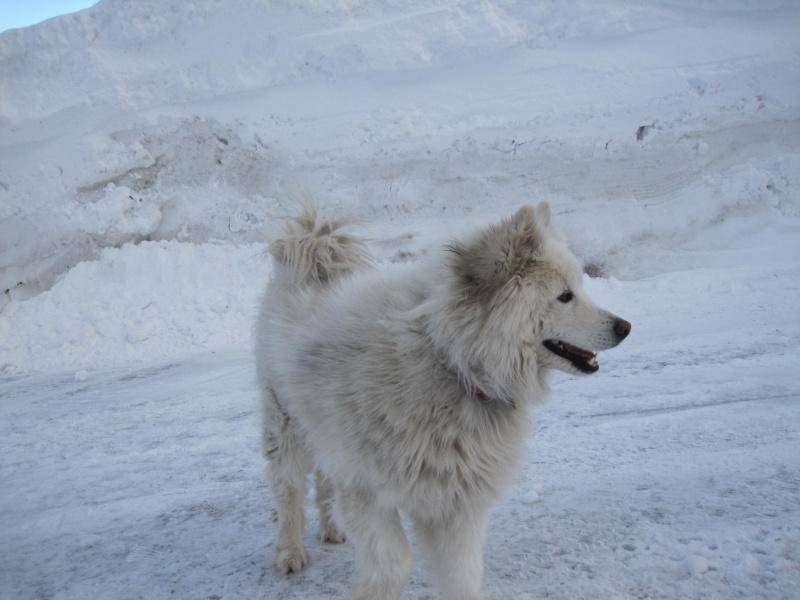 Nouvelles courses de Saskia dans la neige - Page 2 3311