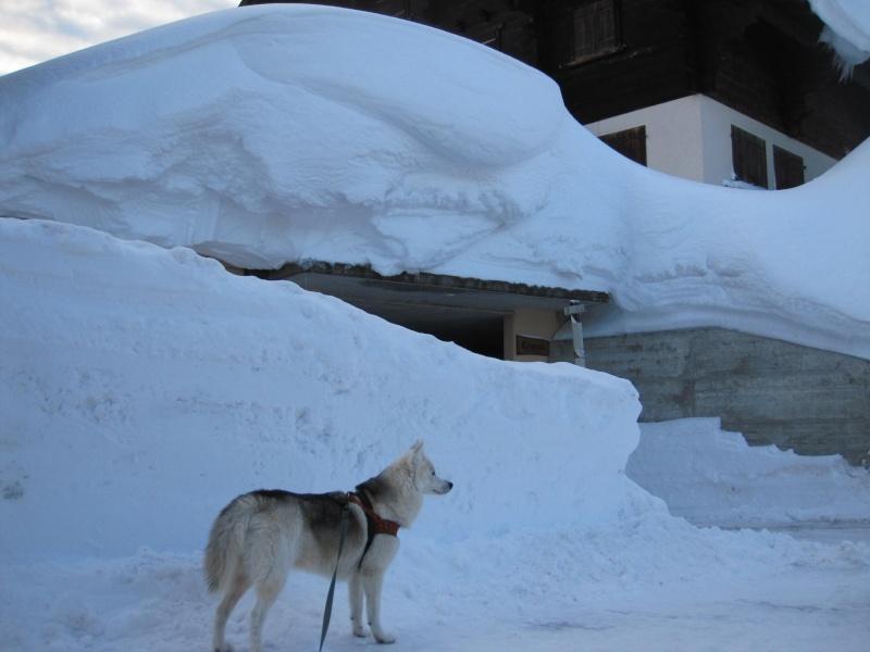Nouvelles courses de Saskia dans la neige - Page 2 3411
