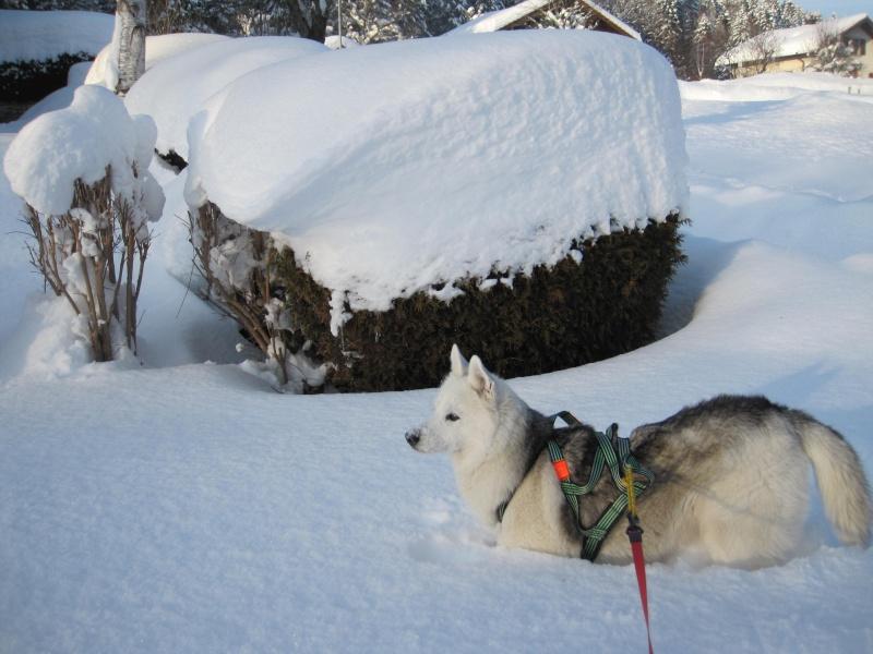 Nouvelles courses de Saskia dans la neige 3510