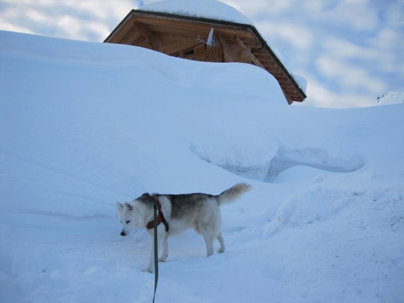Nouvelles courses de Saskia dans la neige - Page 2 3511