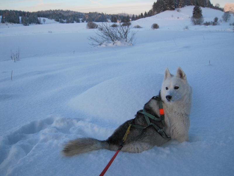 Nouvelles courses de Saskia dans la neige 3910