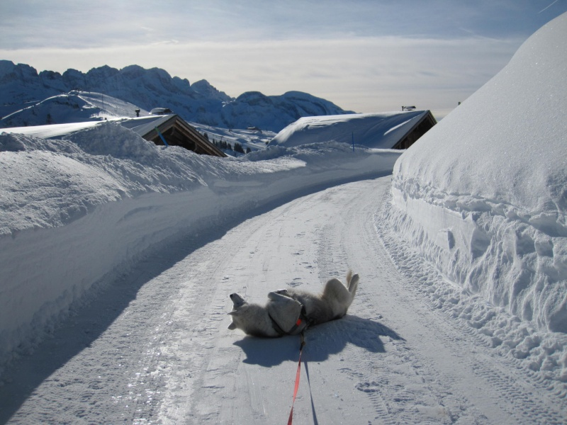 Nouvelles courses de Saskia dans la neige - Page 2 411