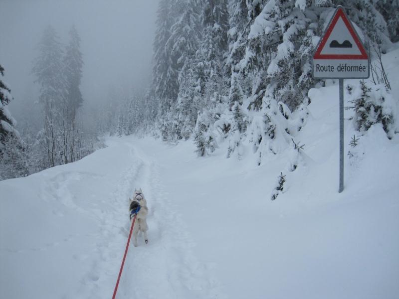 Ski-joering avec deux huskies 418