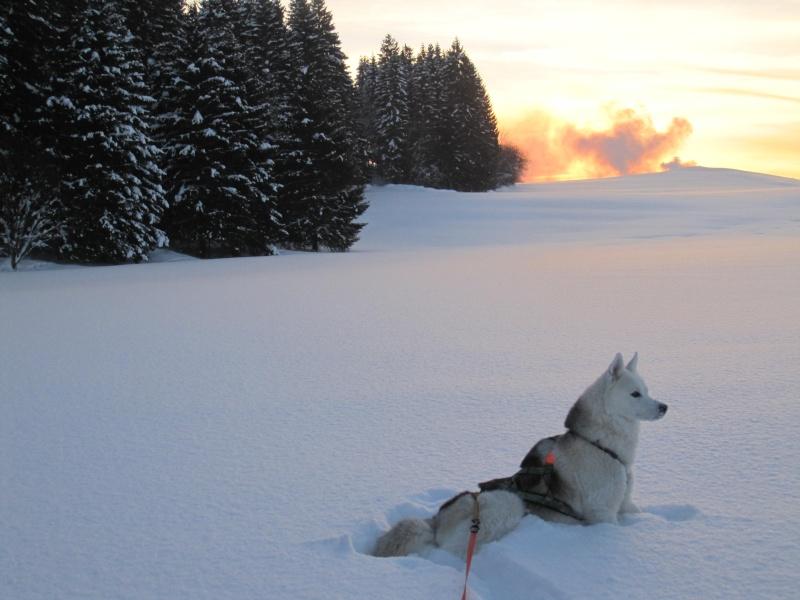 Nouvelles courses de Saskia dans la neige 4310
