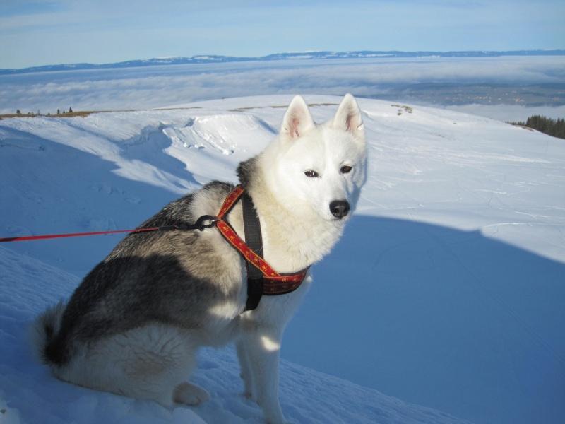 Nouvelles courses de Saskia dans la neige - Page 2 512