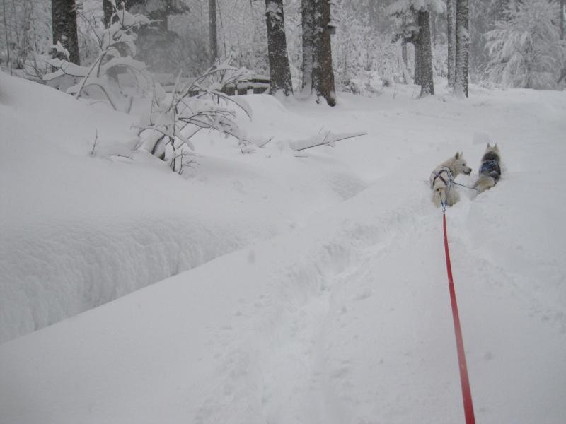 Ski-joering avec deux huskies 515