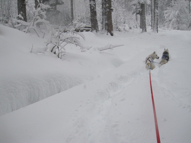 Ski-joering avec deux huskies 516