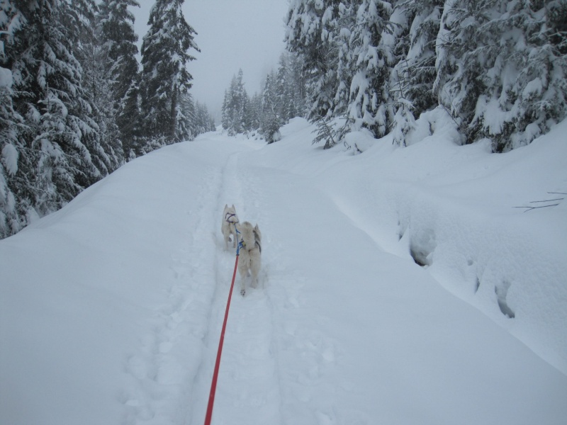 Ski-joering avec deux huskies 518