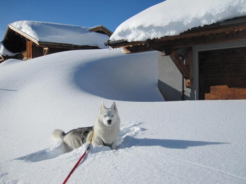 Nouvelles courses de Saskia dans la neige - Page 2 612