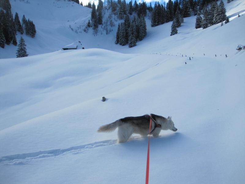 Nouvelles courses de Saskia dans la neige - Page 2 613
