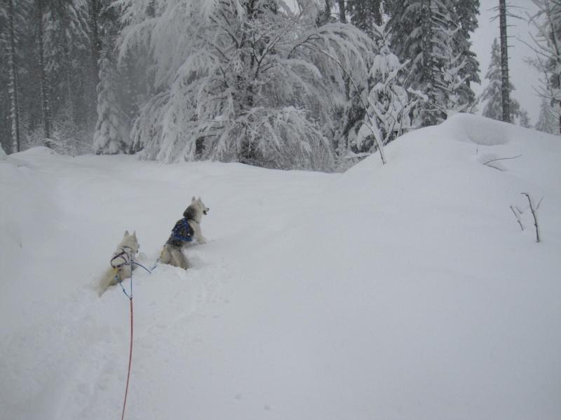 Ski-joering avec deux huskies 617