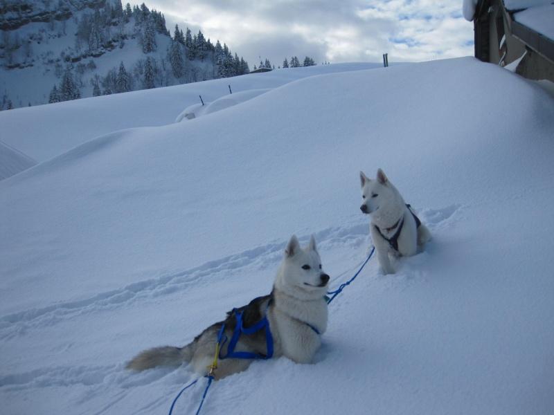 Ski-joering avec deux huskies 618