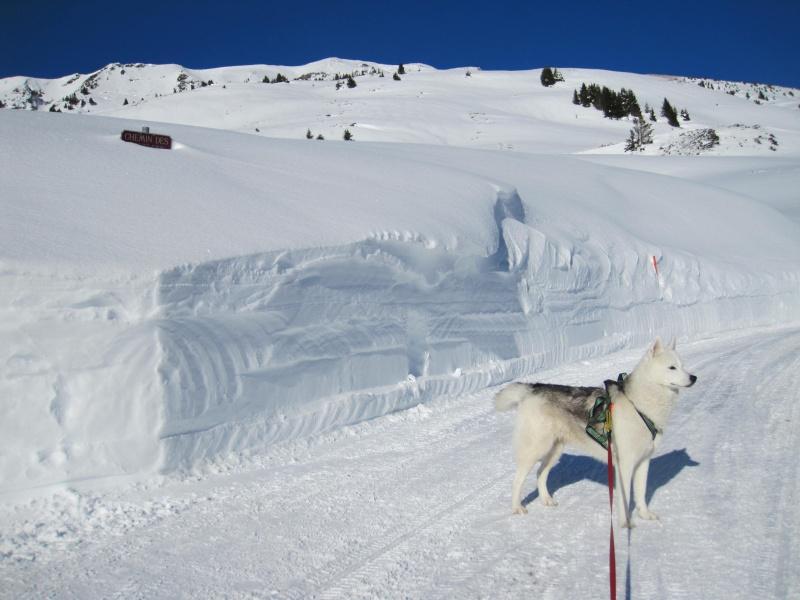 Nouvelles courses de Saskia dans la neige - Page 2 711