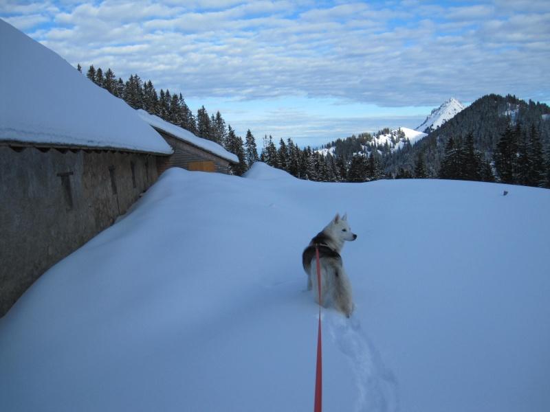 Nouvelles courses de Saskia dans la neige - Page 2 712