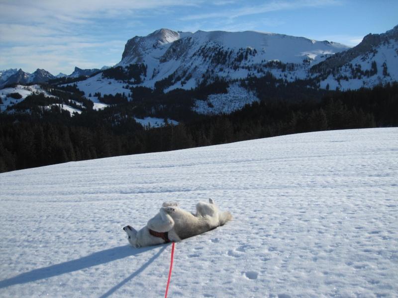 Nouvelles courses de Saskia dans la neige - Page 2 713
