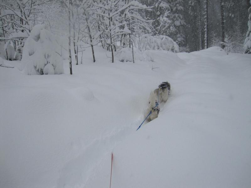 Ski-joering avec deux huskies 716