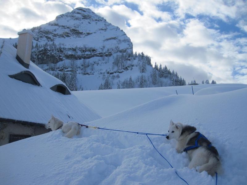 Ski-joering avec deux huskies 717