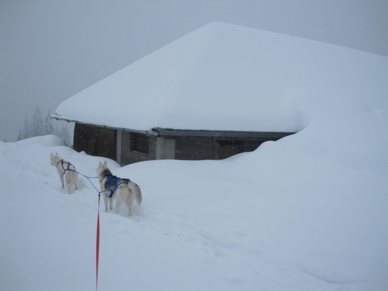 Ski-joering avec deux huskies 718