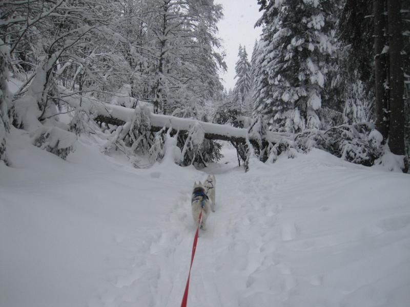 Ski-joering avec deux huskies 818