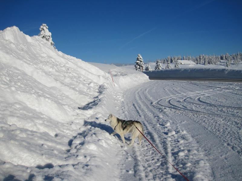 Nouvelles courses de Saskia dans la neige 910