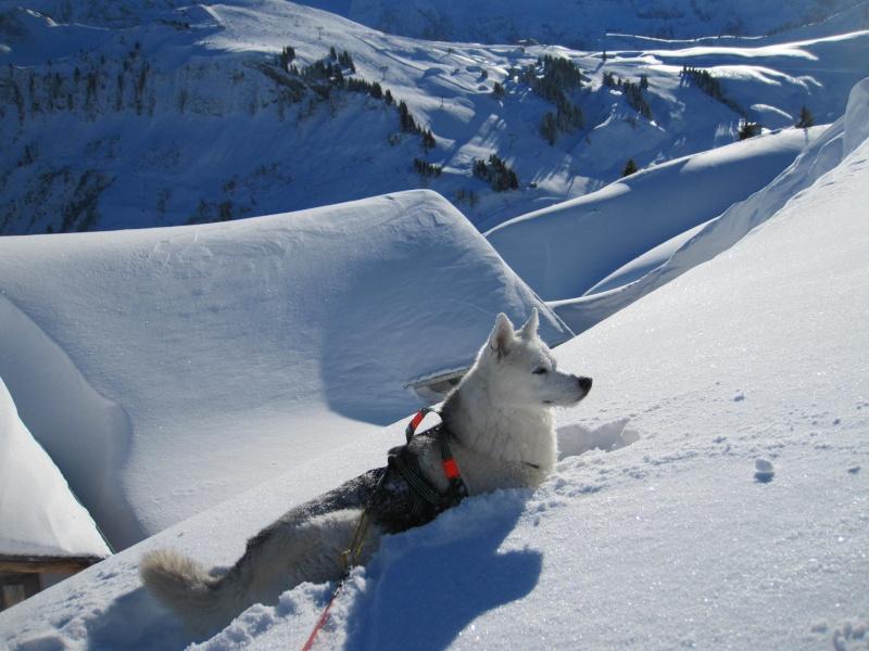 Nouvelles courses de Saskia dans la neige - Page 2 911