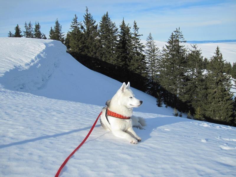 Nouvelles courses de Saskia dans la neige - Page 2 913