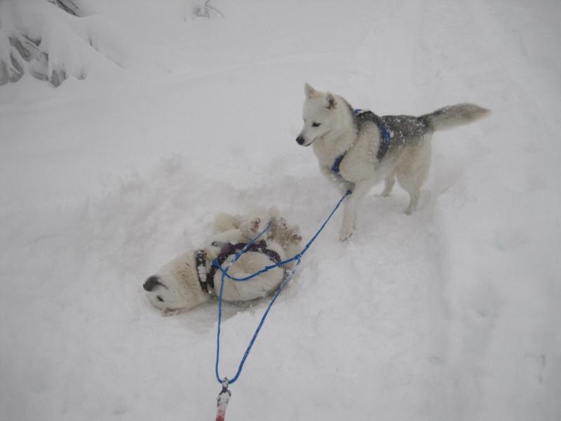 Ski-joering avec deux huskies 916