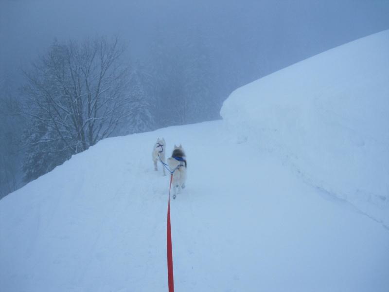 Ski-joering avec deux huskies 917