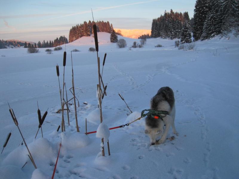 Nouvelles courses de Saskia dans la neige Img_4810
