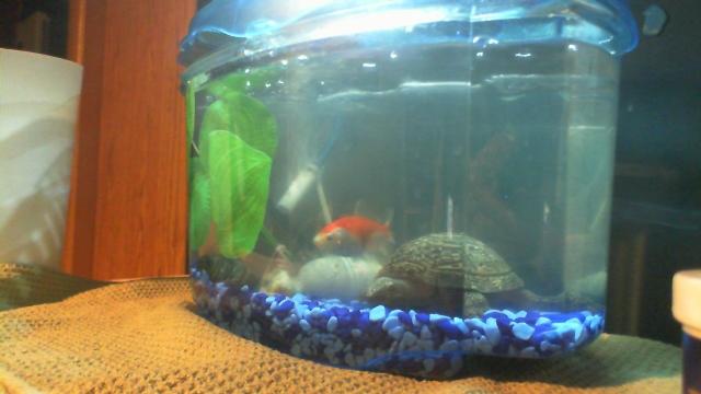 L'aquarium de Lahel 2012-011