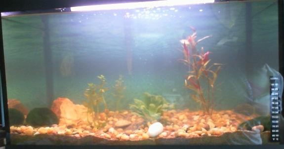 L'aquarium de Lahel Bacent10