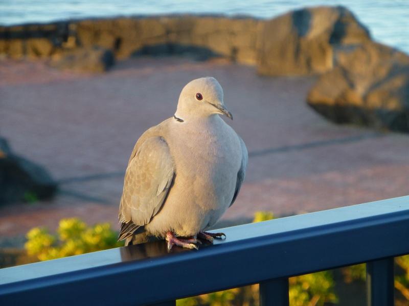 Canary Islands, Lanzarote, Playa Blanca, 2012, holiday 16010